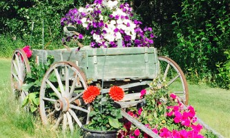 Alaska farm tours Flower Cart Kenleys2019