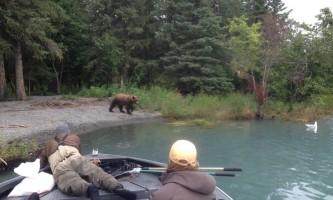 Alaska bearpics Alaska Fishing with Mark Glassmaker