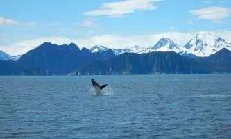 Alaska fjord charters DSCN0654
