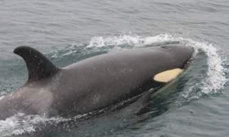 Alaska fjord charters IMG 9534