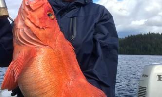 Alaska king charters ketchikan IMG 0383