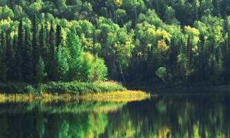 Alaska Nature Guides Talkeetna Lakes Hike 22019