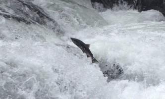 Alaska River Adventures Fishing IMG 5034 FIL Eminimizer2019