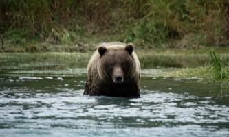 Alaska River Adventures Rafting 12 09 11 252019