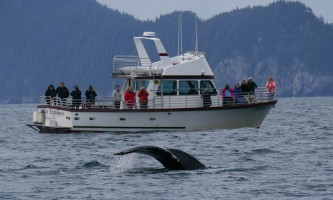 Alaska saltwater lodging Steller Explorer with humpback alaska saltwater lodging