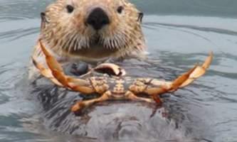 Alaska saltwater lodging Crabby Otter alaska saltwater lodging