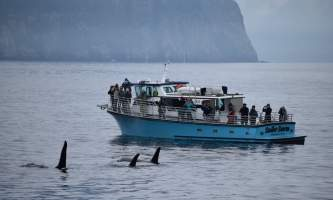 Alaska saltwater lodging stellar sunrise with orcas alaska saltwater lodging