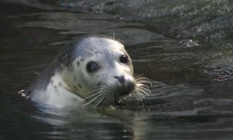 Alaska Sealife Center AK Sealife IMG 19882019