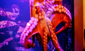 Alaska Sealife Center Alaska Sea Life Center52019