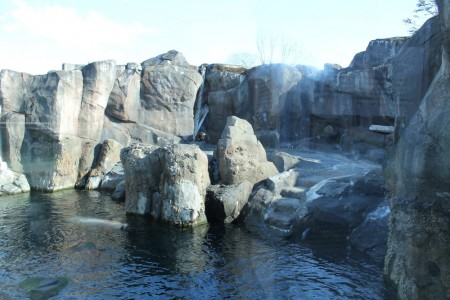 Steller Sea Lion Habitat
