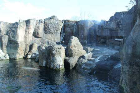 Steller Sea Lion Habitat