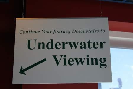 Underwater Viewing