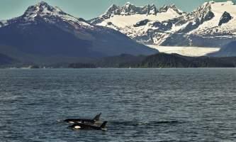 Alaska Tales Whale Watching Brian 1 E4 A0156