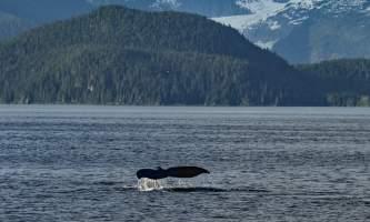 Alaska Tales Whale Watching Brian 1 E4 A7368