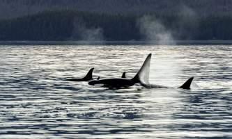 Alaska Tales Whale Watching Brian 1 E4 A9228