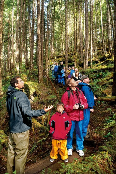 Take a guided walk through an old growth rainforest and marvel at the massive trees