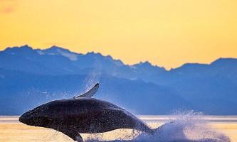 Whale watching adventure whale2 Alaska Travel Adventures