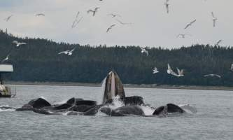 Whale watching adventure Whale Watching Adventure 34