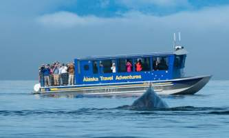 Whale watching adventure Whale and boat for screen