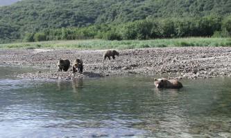 Alaska Ultimate Safaris P90300542019