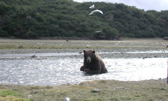 Alaska Ultimate Safaris P90600042019