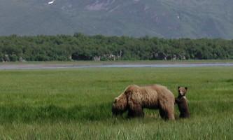 Alaska Ultimate Safaris P10100502019