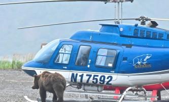 Bear viewing IMG 53092019