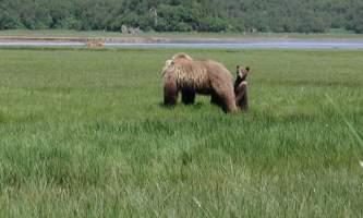 Alaska Ultimate Safaris P10100512019