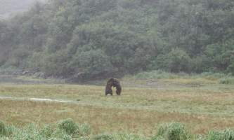Alaska Ultimate Safaris P90400162019