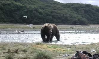 Alaska Ultimate Safaris P90600052019