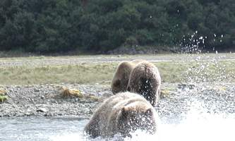 Alaska Ultimate Safaris P90600142019
