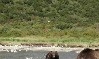 Alaska Ultimate Safaris P90600162019