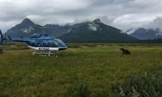 Bear viewing IMG 40772019