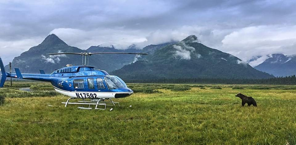 Fly to remote locations in Lake Clark and Katmai National Parks to view bears in their natural habitat