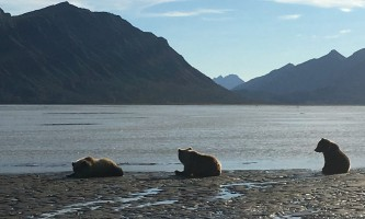 Alaska ultimate safaris helicopter flightseeing IMG 64432019
