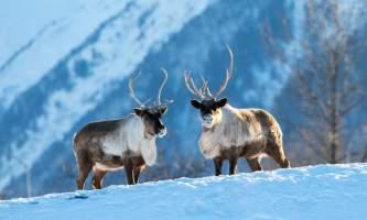 2017 AWCC Reindeer 62019