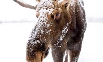 2017 AWCC Winter Bull Moose Tok362019