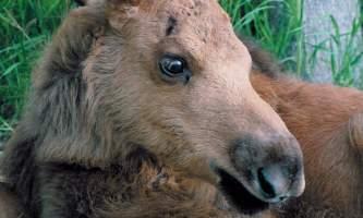 AK Wildlife Conservation Ctr AWCC 222019