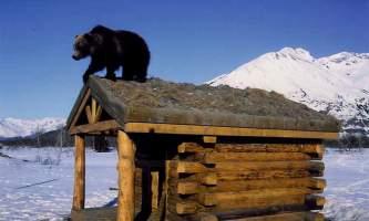 AK Wildlife Conservation Ctr AWCC 282019