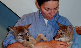AK Wildlife Conservation Ctr AWCC 382019