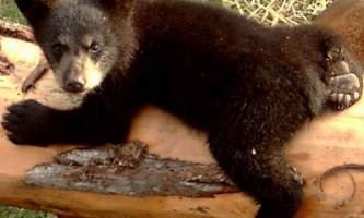 AK Wildlife Conservation Ctr AWCC 472019