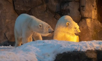 2019 bears introduction 1842019