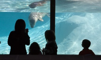 Seal Otter 862768124 may09 04362019