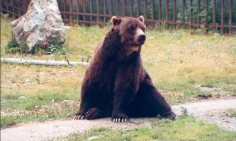 Alaska Zoo D Scott Image82019