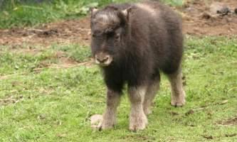 Alaska Zoo John Gomes mya2019