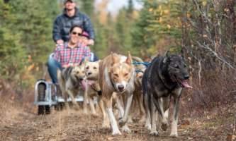 Liz Failor Summer Sled Ride alaska alaskan husky adventures
