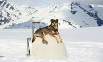 Alpine air alaska girdwood glacier dogsledding0606 AS 2696 TA