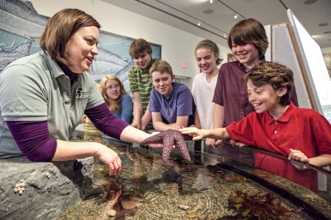Kids love the touch tank in the Discovery Center