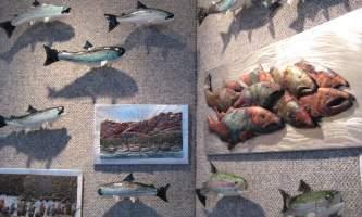 Alaska fish Aurora Fine Art Gallery