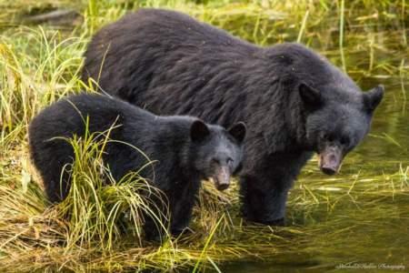 Black Bear & Wildlife Exploration